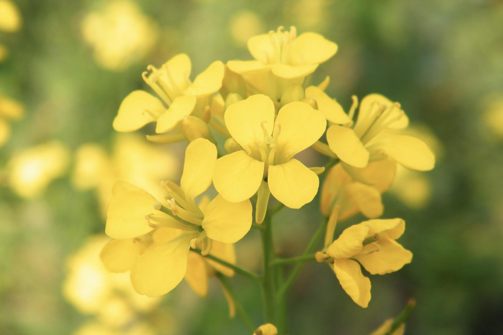 Floriterapia e la cura del dolore nell'anziano